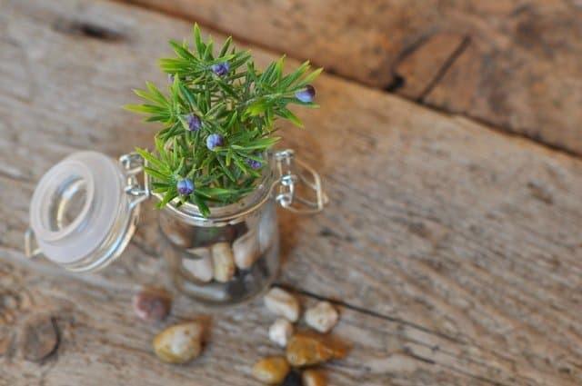 36 awesome mason jar uses - Almost Zero Waste