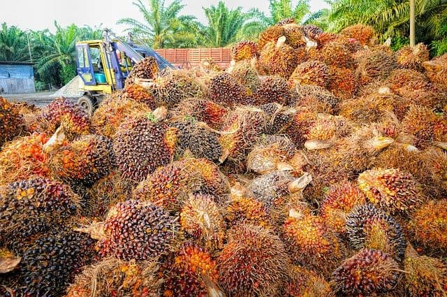 Why Is Palm Oil Bad For The Environment